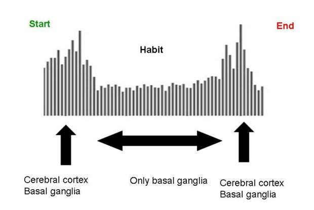 Brain activity during habits